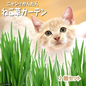 栽培1回分ニャンてかんたん ねこ草ガーデン 2P 猫草 関東当日便