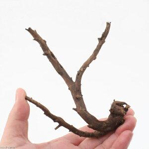 365日毎日発送 ペットジャンル1位の専門店形状お任せ 極上流木 Sサイズ(約15〜20cm) 1本...