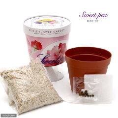 食卓を彩るお花を育てよう!食べるお花の底面給水栽培セット エディブルフラワーガーデン ス...
