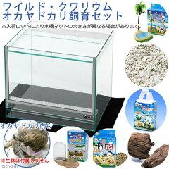 お部屋の中の小さな浜!ワイルド・クワリウム オカヤドカリ飼育セット オカヤドカリ 関東当日便