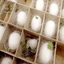 夏休みの自由研究に!蚕 飼育セット 絹糸作出キット 自由研究 本州・四国限定