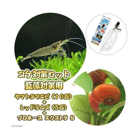 (エビ・貝)コケ対策セット 藍藻対策用 ヤマトヌマエビ10匹+レッドラムズ5匹+プロホースエクストラ S  本州四国限定
