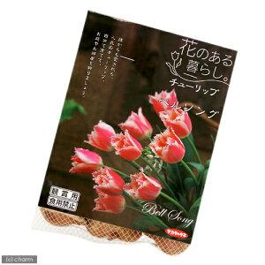 人気品種!(観葉)チューリップ球根「花のある暮らし。人気上昇中品種」シリーズ 〜ベルソン...
