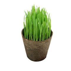 無農薬!葉が出た状態で発送!すぐに食べられる!(ビ)ペットグラス ~ワンニャン大好き草~...