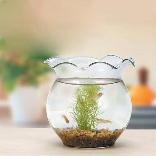 GEX ジェックス ちっちゃなメダカ鉢 ガラス製金魚鉢