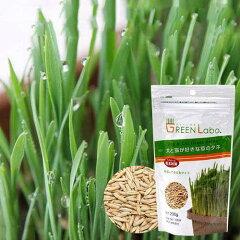 ペットグラスを自宅で簡単栽培!犬と猫が好きな草のタネ 200g【関東当日便】【HLS_DU】【RCP】