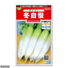 野菜の種 ダイコン 冬自慢(サカタ交配) 品番:925−009【サカタのタネ】【関東当日便】