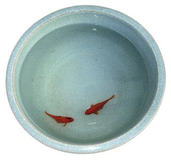 陶器睡蓮鉢