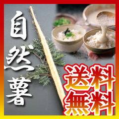 自然薯(じねんじょ)(山芋)送料無料<自然薯>≪産直品≫(じねんじょ)(山芋)約<1kg>送...