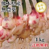 新生姜 しょうが 4kg 無農薬 熊本県産 送料無料