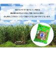 波照間産 黒砂糖 ブロック 300g×2 画像3
