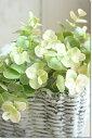 ほんのり淡いピンクがはいった葉が可愛い♪【定形外240円対応可能】◆ユーカリ・プリピッグ【ピ...