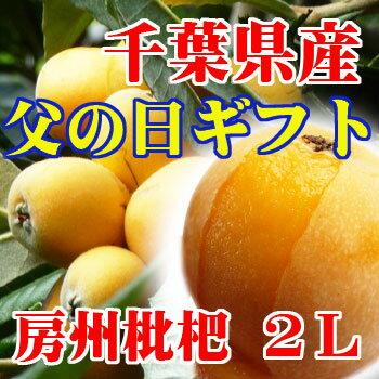 千葉県房州びわ露地・2L【父の日ギフト】