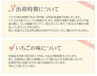 和歌山県産いちごまりひめ300〜500g×2パック【送料無料】紀州のブランド苺。