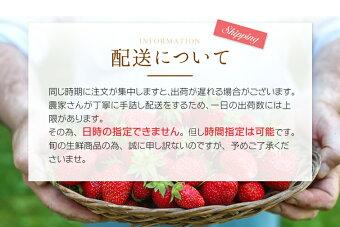 和歌山県産いちご「まりひめ」300〜500g×2パック【送料無料】紀州のブランド苺【逸品】[WARMJAPAN]