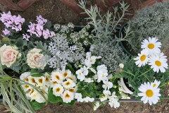 ホワイトカラーでお庭を彩る 鉢花花苗セット♪【送料無料】ホワイトカラーガーデンセット苗