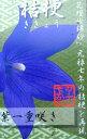 桔梗(キキョウ)苗 高性種 紫 一重 3号苗(c14)