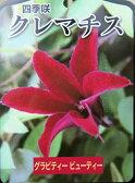四季咲きクレマチス グラビティービューティー 3.5号苗(b7)