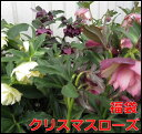 Imgrc0072420112