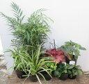 日陰で育つ植物 洋風シェードガーデンセット