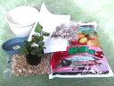 幸福を呼ぶと言われるワイルドストロベリーワイルドストロベリー栽培セット(赤実)
