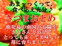 鹿児島限定★あま〜い苺 (大粒いちご)♪さつまおとめ サンティア★化粧箱入り【日付指定不可】