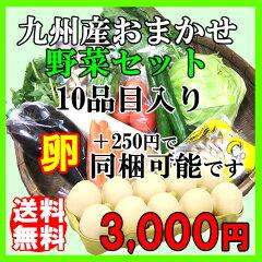 鹿児島の市場から直送!九州産の野菜おまかせセット店長の部屋で商品内容確認できますポイント1...