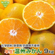 みかん9kg特別栽培