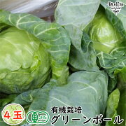 グリーンボール4玉有機栽培冷蔵便宮崎産オーガニック業務用まとめ買いキャベツ送料無料