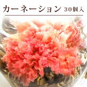 花 咲く工芸茶 30個入 カーネーション 萬紫千紅 ブルーミ...