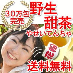 【送料無料】30万包完売!花粉の時期に甜茶ポリフェノール5倍が大人気のバラ科の甜茶を【100%...