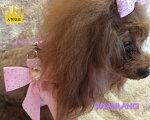 【SUSANLANCIスーザンランシー】スワロフスキー大きいリボン付ハーネスセレブ愛用犬用品
