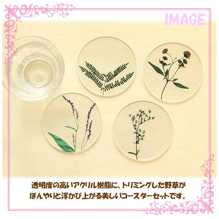 【定形外】 toumei トウメイ  押し花 coaster コースター A/B/カーネーション