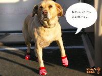 hp201ポチタマボーダーソックス犬靴下ネコ靴下