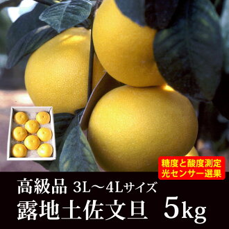 [Will start shipping from early February] ★ roji Tosa Buntan (Pummelos) luxury goods and 5 kg ( 3 ~ 4 L size = 7-9 ball ) ★