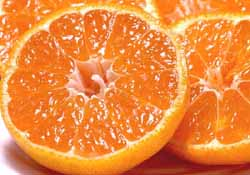 Sample ★ ◆ and +105 yen of the Shikoku (うんしゅう) Mandarin (2 kg) ★ * cool flight cod +210 Yen is needed (not dated, book I)
