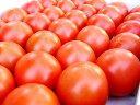 高糖度フルーツトマト 高知県夜須町産 約1.8キロ ご家庭用(玉数オマカセ品)