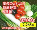 ※園芸やさい王国・南国土佐から、とれたて野菜8種類セットをお届けします。冷蔵便でお届けしま...