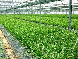 とれたて野菜8種類セット詰め合わせ高知産レシピ・追加機能付き送料無料[Qv10]