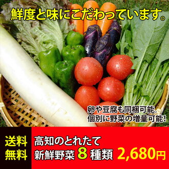 ★ [renewal! > 8 kinds of fresh vegetable set with Kochi production recipes ★