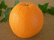 オレンジ サンプル フルーツ パーティー インテリア