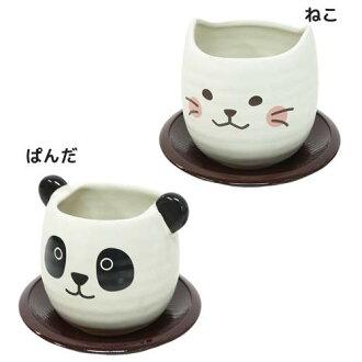 杯碟杯 Kitty 熊貓動物薩馬可愛小禮物小玩意條款白色貨物貨物存儲電影集合