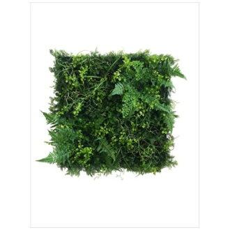 到有Wall Plants frame室內裝飾藝術工業風格綠色&粗礦白架子美工公司62.5*62.5cm墻壁裝飾額頭的商品郵購電影收集12/22深夜2點