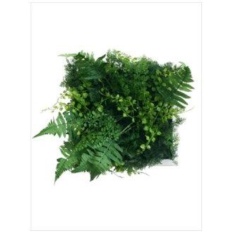 到有Wall Plants frame室內裝飾藝術工業風格綠色混合物白架子美工公司33*33cm墻壁裝飾額頭的商品郵購電影收集12/22深夜2點