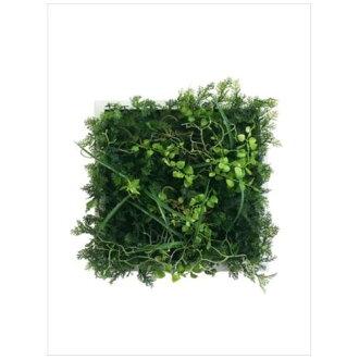 到有Wall Plants frame室內裝飾藝術工業風格粗野的綠色的白架子美工公司33*33cm墻壁裝飾額頭的商品郵購電影收集12/22深夜2點