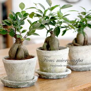 観葉植物風水パワー!オシャレなガジュマルアンティーク調の手作りモスポット鉢・皿付き4号鉢(約13×11cm)P01