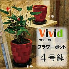 ビビットな植木鉢