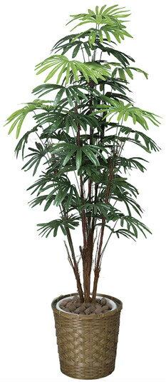 《竹・バンブー》《アートグリーン》《人工観葉植物》光触媒 光の楽園 シュロチク 1.6【RCP】:クローバープレイン