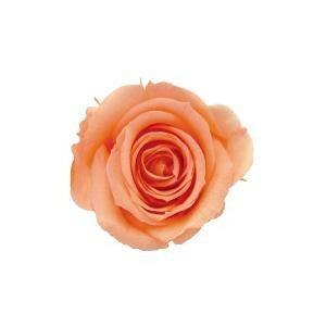 花・観葉植物, プリザーブドフラワー verdissimo 58905