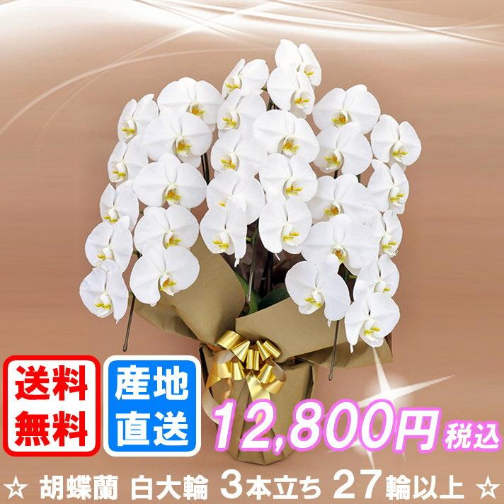 胡蝶蘭白大輪3本立ち27輪以上(つぼみ込み)送料無料(ヤマト運輸での配送です)